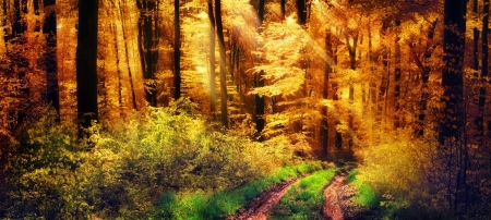 Sunbeams through Fall Forest Foliage