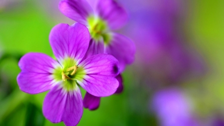 Purple flowers - love, purle, flower, amazing
