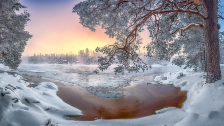 Colors of the winter - lake, tree, winter, snow