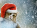 Chrismtas cat