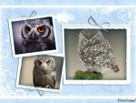 OWLS FRAMED