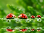 Ladybugs family