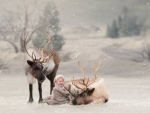 Santa's reindeers and a baby boy