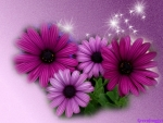 PRETTY PURPLE DAISIES