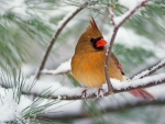 winter-bird