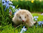 Forget Me Not And Hedge Hog