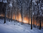 Slope in the Winter Forest at Sunset