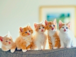 cute cats in a row