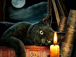 The Witching Hour - Cat F