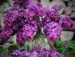 VASE OF LILACS