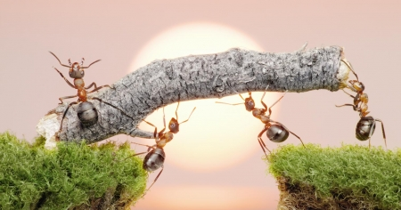 ants at work - stick, insect, grass, ants