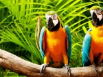 Parrots on a Perch