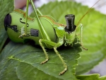 melody of a grasshopper