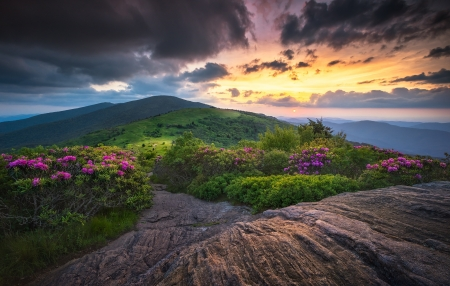 Roan Mountain Highlands - Roan Mountain Highlands, Mountains, flowers, sun, trees, hills, sunset, clouds, bushes, grass, North Carolina
