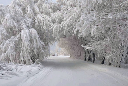 It's Cold Outside - Outside, Winter, Snow, Road, Trees, Cold