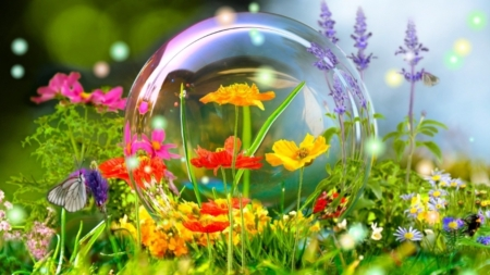 Summer Bubbles - Yellow, Flowers, Orange, Bubbles, Nature