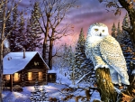 Night Watch - Owl
