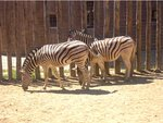 The Other Zebra's