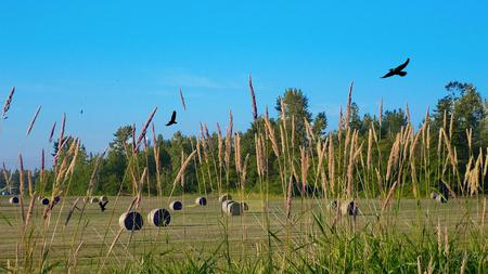 Wilder Ranch Hay Field - field, widescreen, country, farm, hay, washington, eagles, rural