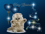 Merry Christmas ! from a lonely kitten