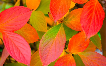 Autumn Colours - leaves, green, leafs, orange, red, colours, autumn, peach