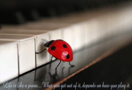 lady-bugs - quote, piano, red, black