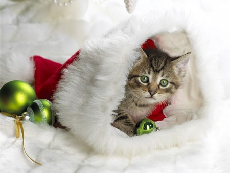 Kitten In The Stocking - cue, christmas, kitten, other, kitty, santa, cat, stocking, ornaments