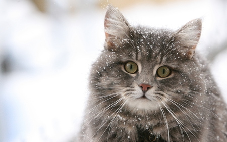Another Stray Cat - stray, winter, cat, snow