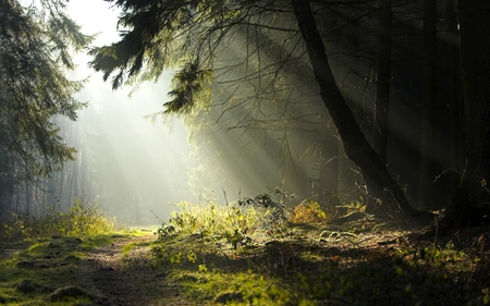 Obscure - widescreen, obscure forest, sun, tree, woods with sun shining through, forest, misty