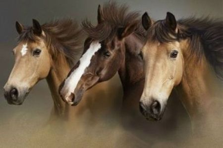 Beauity of the Wild - horses, cheval, wild