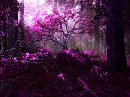 PURPLE FOREST - purple, trees, leaf, nature, forest