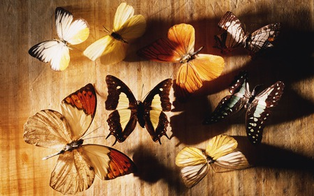 BUTTERFLY COLLECTION - butterflies, collection, multiple