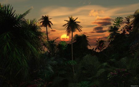 Tropical Destination - sunrise, sunset, tropical, palm trees, nature, sun
