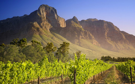 Vineyard in Franschhoek, South Africa - fields, blue sky, vineyard, green, mountains, nature, landscape, south africa