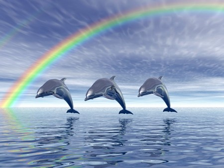 Dolphins with Rainbow - Dolphins & Animals Background Wallpapers ...