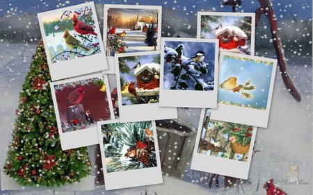Snowbirds - widescreen, snow, xmas, winter, holiday, christmas, birds