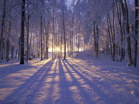 Winter sunset - cold, trees, sunset, snow, shadows, forest