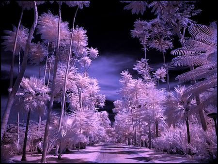 tropical garden - purple, palms, sky, white