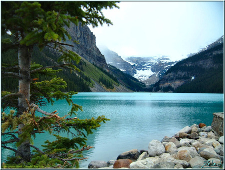 Lake Louise - lake, louise, trees, mountains, alberta, canada
