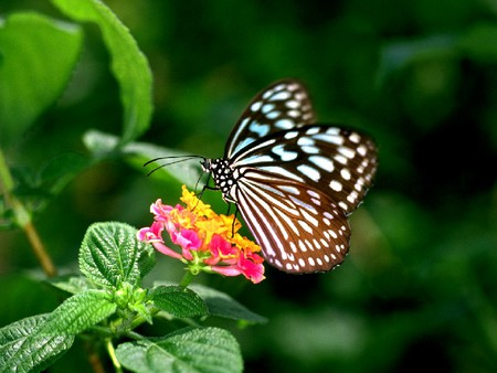 flower, natural flower, nature, butterfly  flowers  nature, Beautiful flower