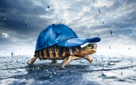 Walking in the rain - turtle, hat, sky, cute, blue, drops, animal, funny, water, clouds, 3d, nature