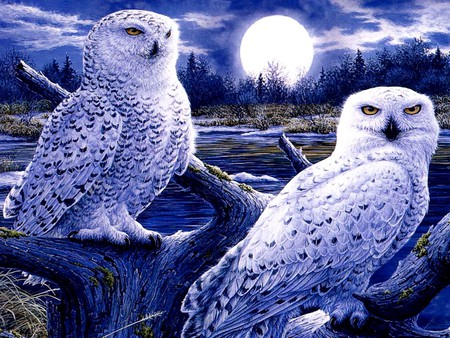 OWL MOON - Other & Abstract Background Wallpapers on Desktop Nexus ...