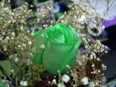 Green Rose - rose, green, flower