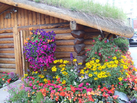 log cabin flowers nature background wallpapers on