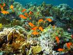 Coral Reffs with small fishes