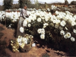 Fanne Duval. 1891. 'Chrysanthemum garden in California'.