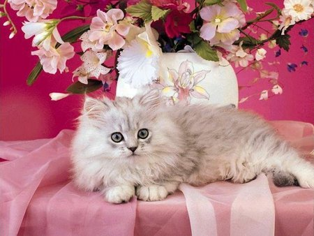 Cat on pink - cat, flower, cute, kitten