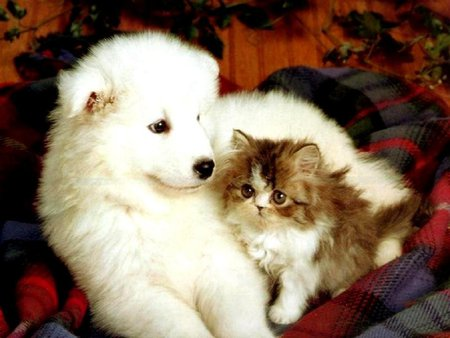 White and brown - dog, kitten, cute, puppy, hug