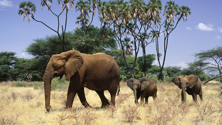Elephants Family - animals, big, gigants, wild, elephants, family