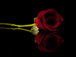 Black Red Wallpapers  Full HD wallpaper search